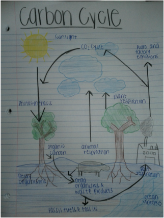 Carbon Cycle Ap Environmental Science